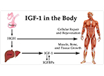 Инсулиново Подобен Фактор на Растежа